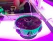 scorpion-bowl-3